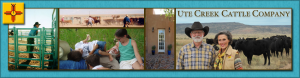 cropped-copy-Header-Montage-Turquoise.png